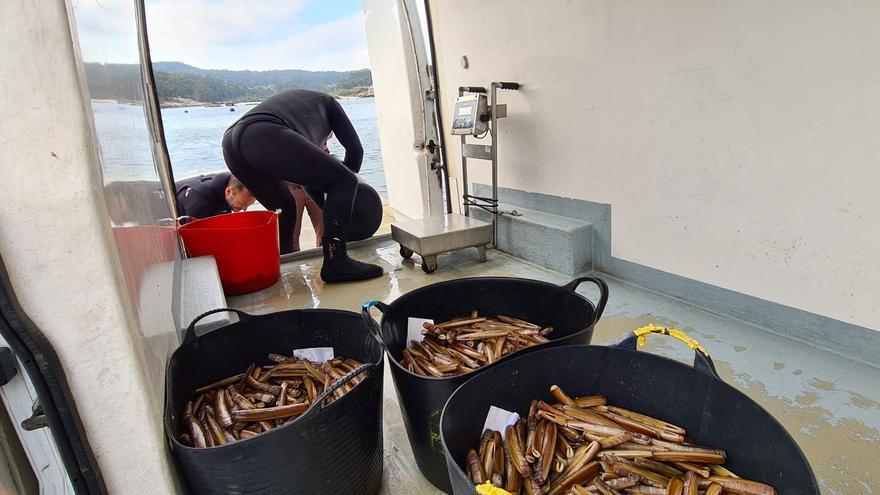 Las lonjas ingresan 745.000 euros con 78 toneladas de navaja y longueirón
