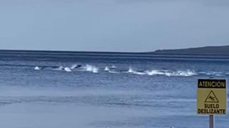 """""""¡Qué bonito, qué precioso!"""": el espectáculo de una manada de delfines"""