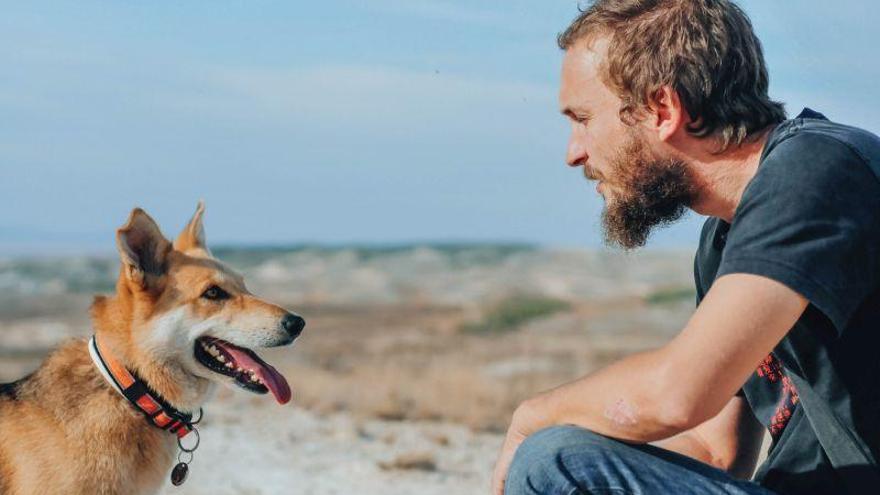 «Zarpa se ha especializado en perros que viven mucho tiempo en la calle»