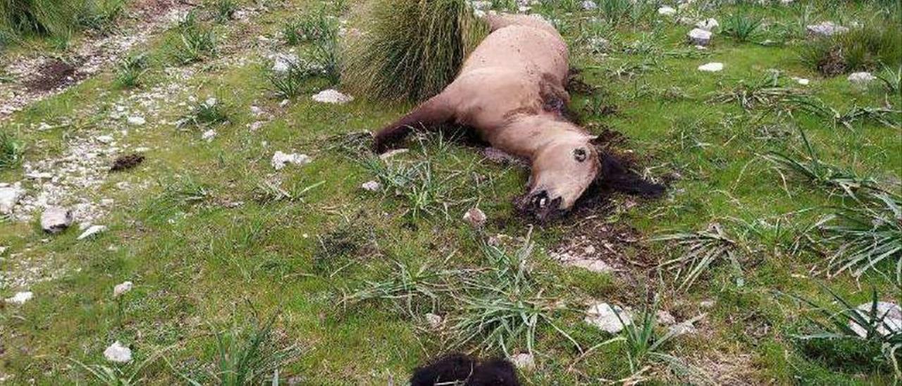 Imputado por matar a hachazos a un caballo en una finca en Mallorca.