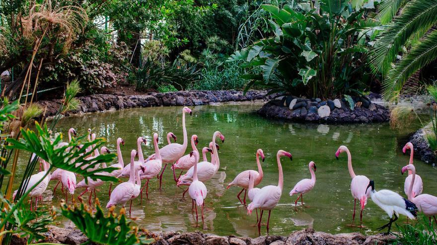 El centro Oasis Wildlife amplia sus días de visita tras el cierre  por la pandemia