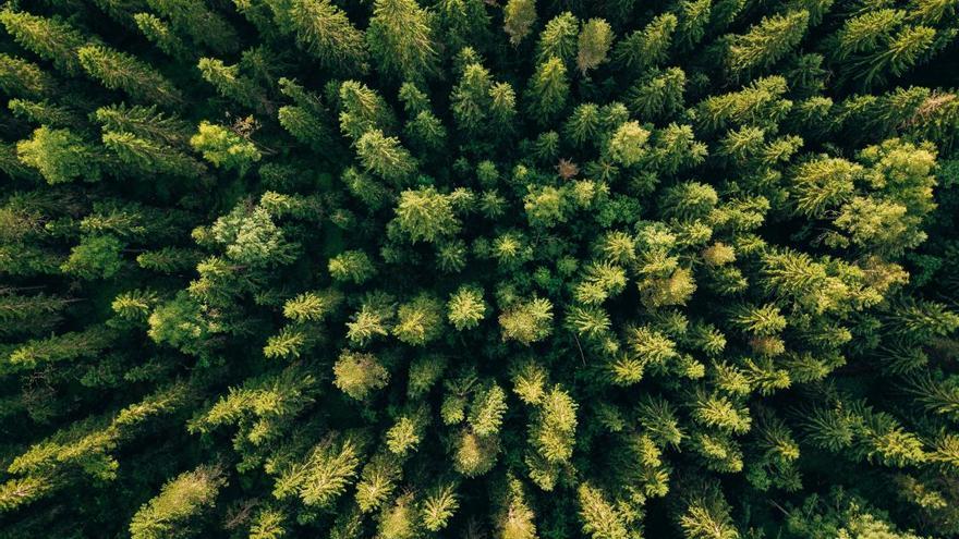 La subida temperaturas afecta al crecimiento de los bosques