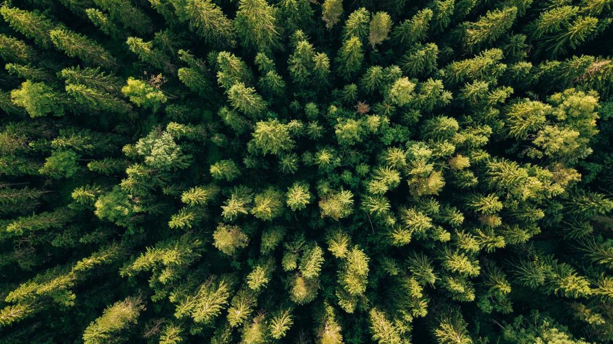 Vista aérea de un bosque