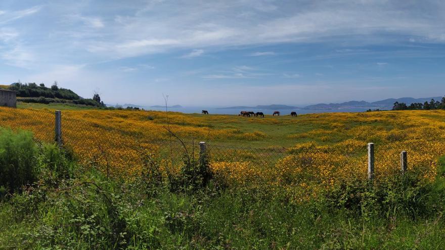 O Zondal: un paraíso sobre la ría de Vigo en proceso de descontaminación