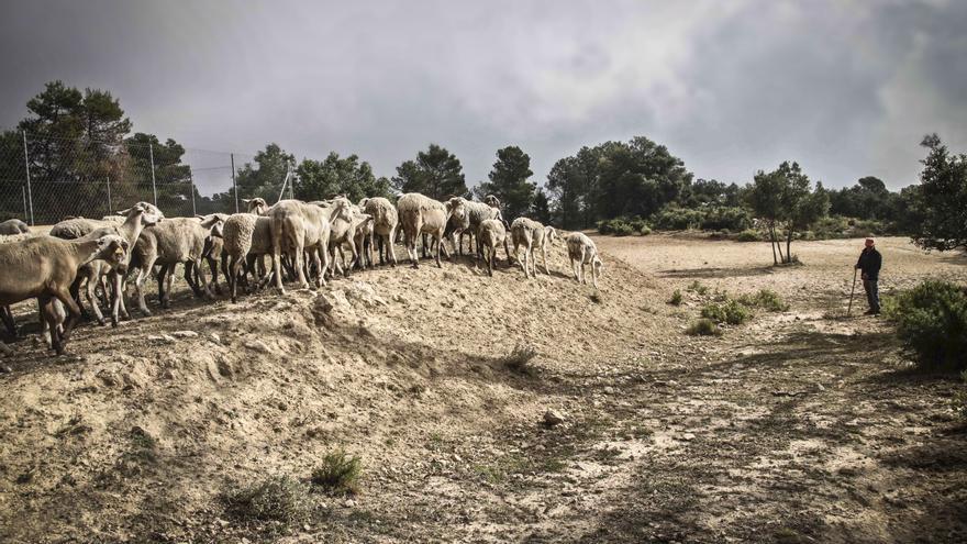 El Consell apuesta por la agricultura y la ganadería frente a los incendios en la Font Roja