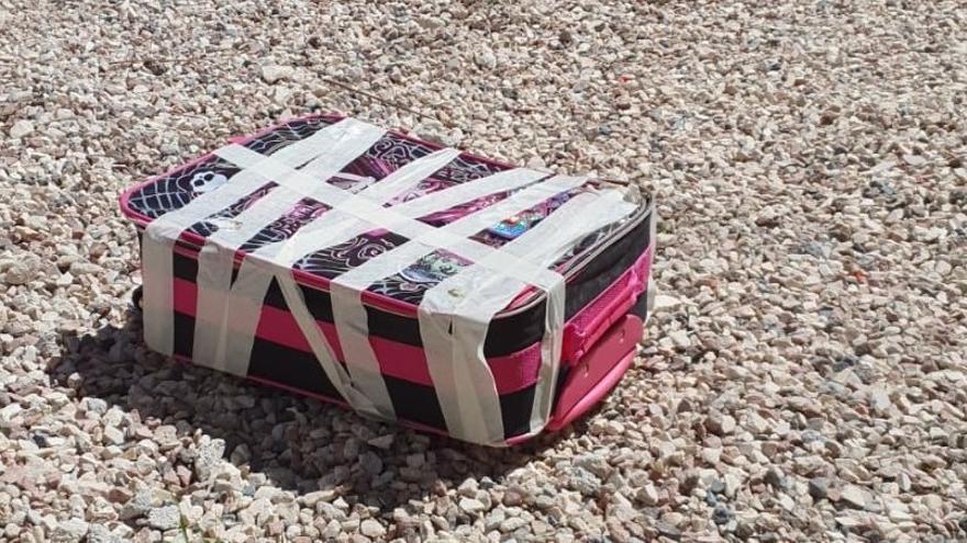 Se busca al individuo que abandonó a cinco gatitos vivos en una maleta en Alicante