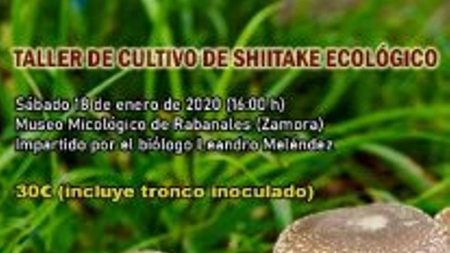Taller de cultivo de setas en Rabanales