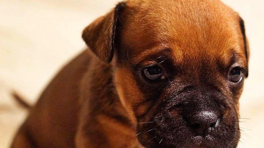 Las razones por las que ponemos nombres a las mascotas