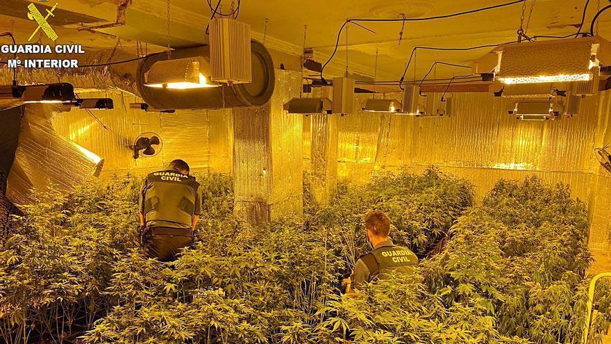 Golpe al tráfico  de marihuana en Millares y Riba-roja