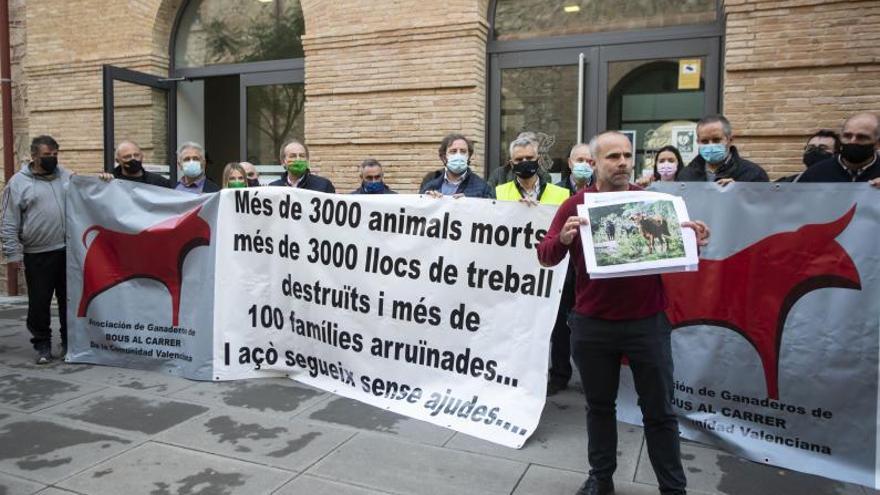 Protestan los ganaderos de «bous al carrer»