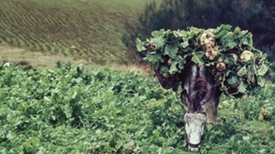 La vida lenta. Memorias y ritmos del rural gallego