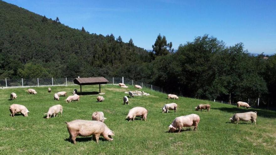 Coren fomenta el cuidado del medio rural gallego