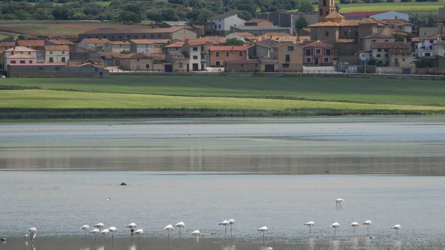 Flamencos en la Laguna de Gallocanta