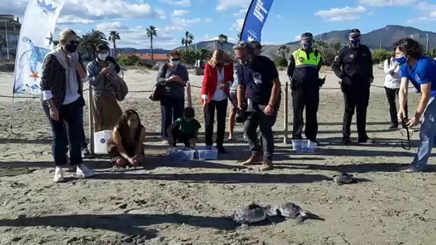 La Fundación Oceanogràfic suelta 20 tortugas marinas en Castelló
