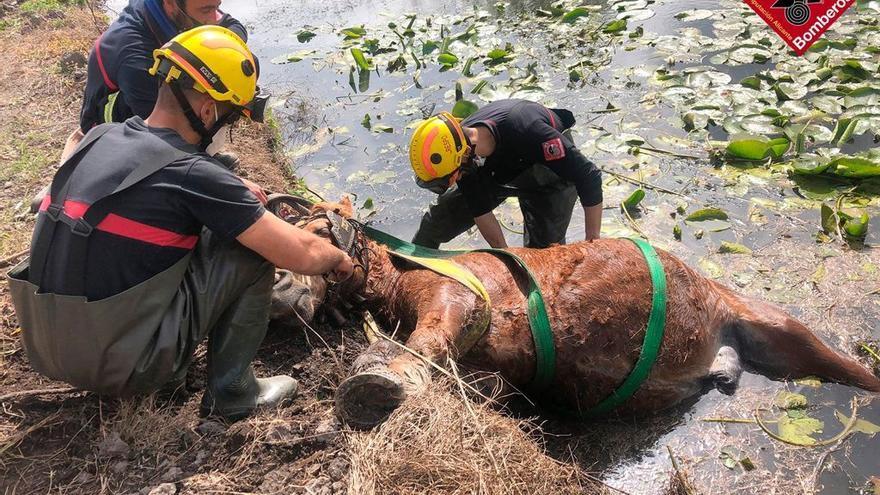 Los bomberos salvan a un caballo que cayó a una acequia del Marjal de Pego