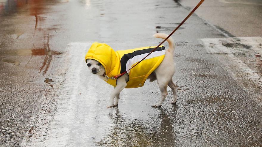 Las nuevas normas para los dueños de perros en València