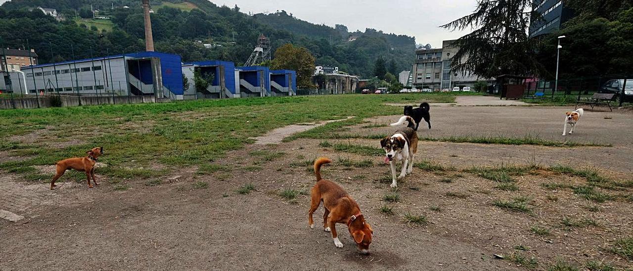 Parque de perros de Barredo.