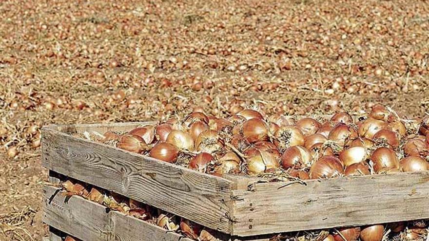 Mercadona apuesta por comprar la cebolla de origen nacional