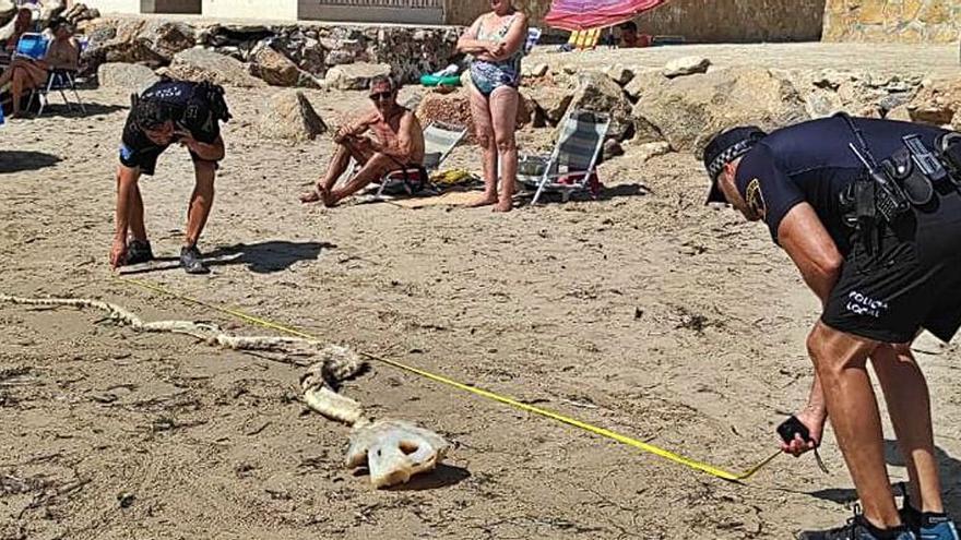 Un esqueleto de tiburón de cuatro metros sobre la arena