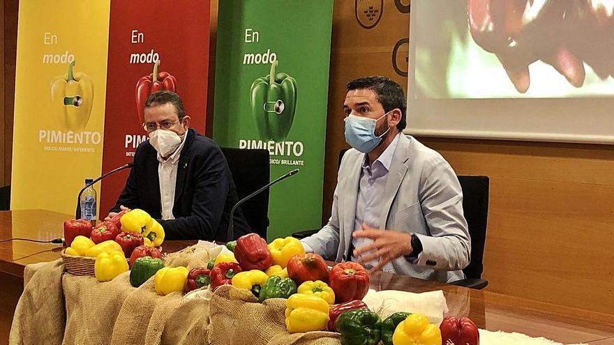 La Región lanza una campaña para promover el consumo y la comercialización del pimiento