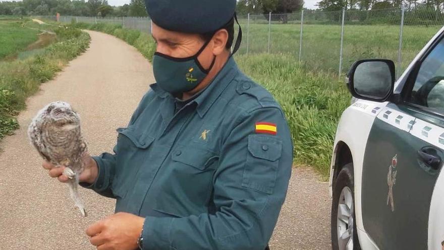 La Guardia Civil recupera un cárabo en el patio de una casa en Sayago