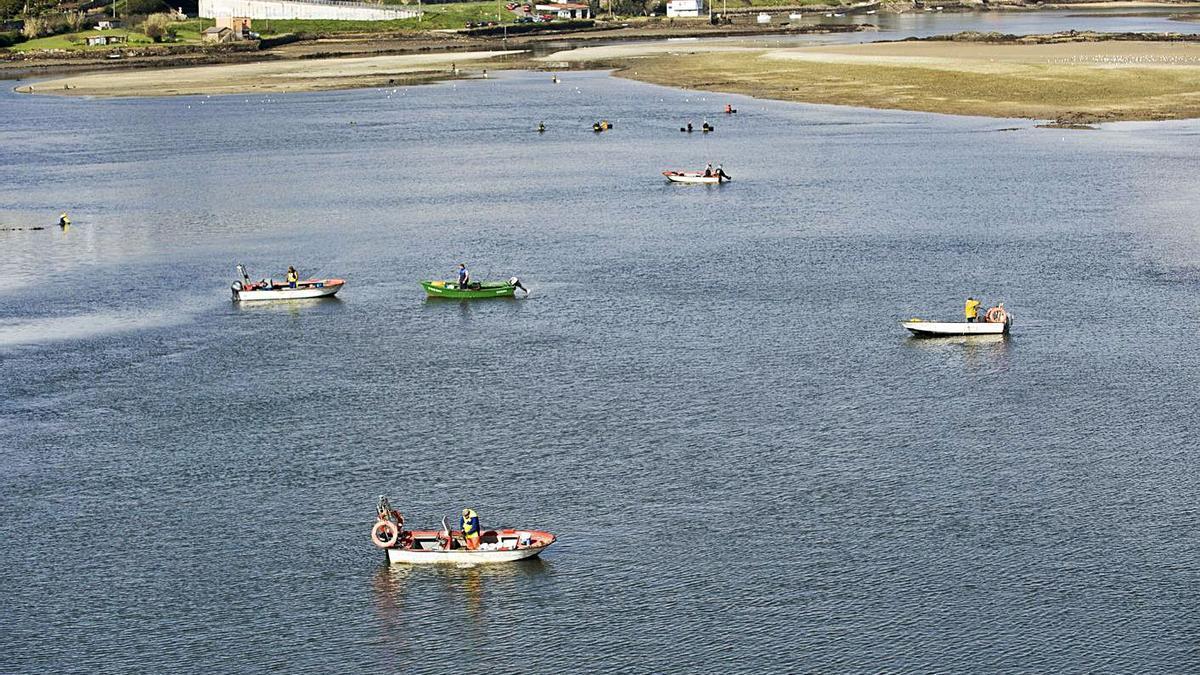 Mariscadores en la ría de O Burgo.     // CASTELEIRO/ROLLER AGENCIA
