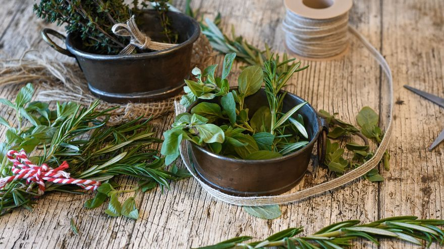 Cinco hierbas aromáticas para cultivar en casa