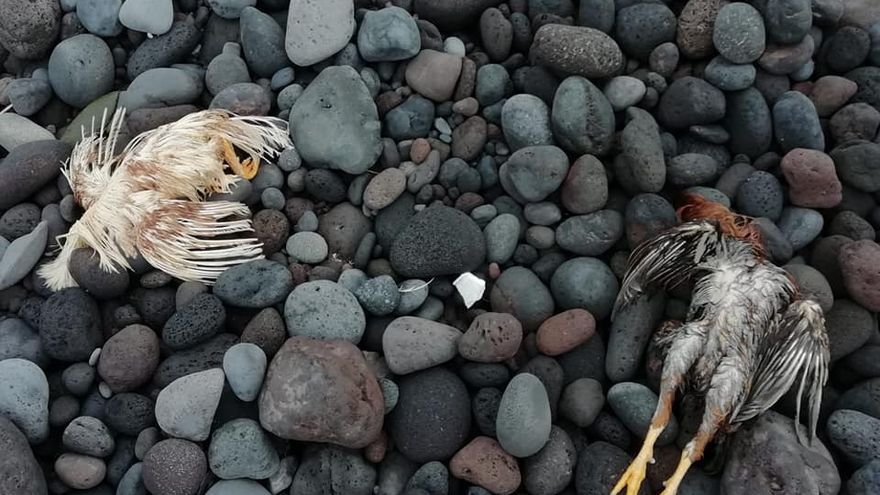 Hallan nuevos restos de santería en la playa de la Viuda