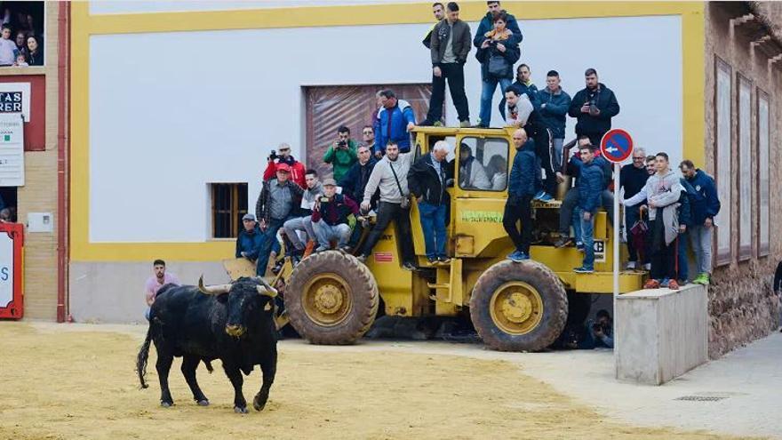 Sant Vicent de la Vall presenta los primeros toros para abril del 2022