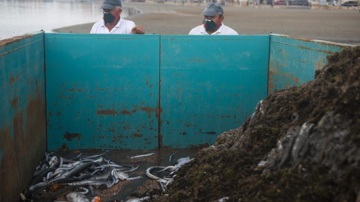 Dos operarios retiran de la playa de Villananitos los peces muertos en octubre de 2019.