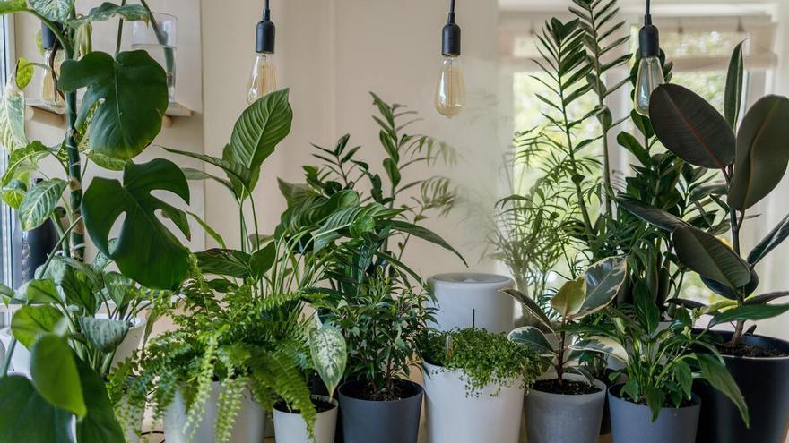 Las mejores plantas de interior que hasta el más torpe puede mantener