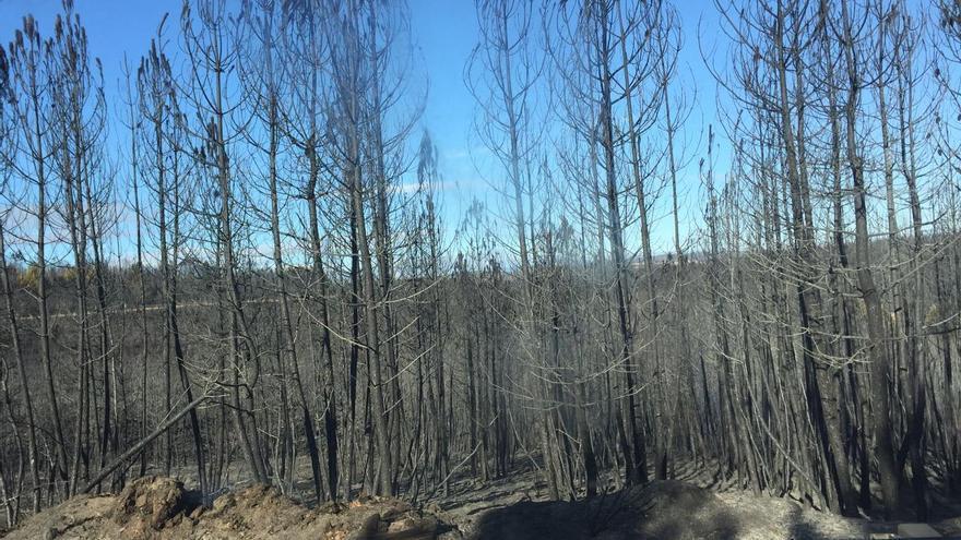Árboles quemados en Aliste.