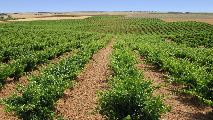 La Guía Peñín reconoce la calidad de la última añada de los vinos de la DO Toro