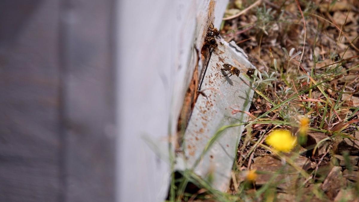 Instalan colmenares de polinización en los parques forestales de la provincia de Málaga
