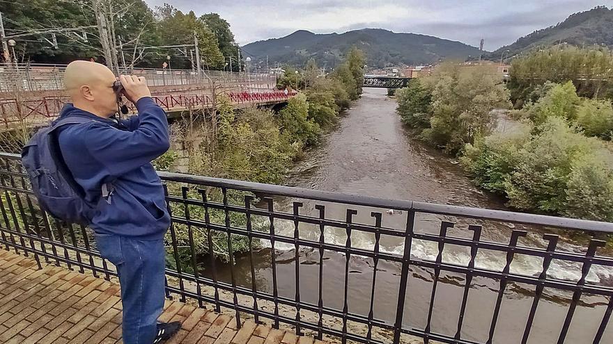 El canto del andarríos chico celebra la recuperación ambiental del río Caudal