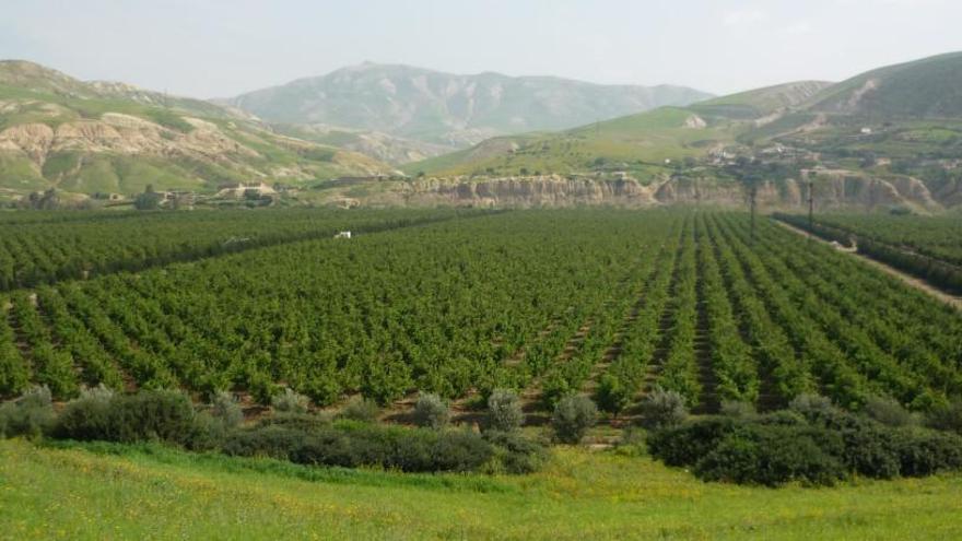 El negocio agrario de Marruecos
