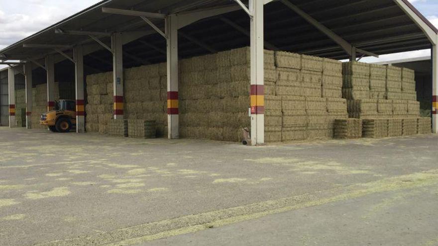 El sector de la alfalfa teme al precio del transporte marítimo