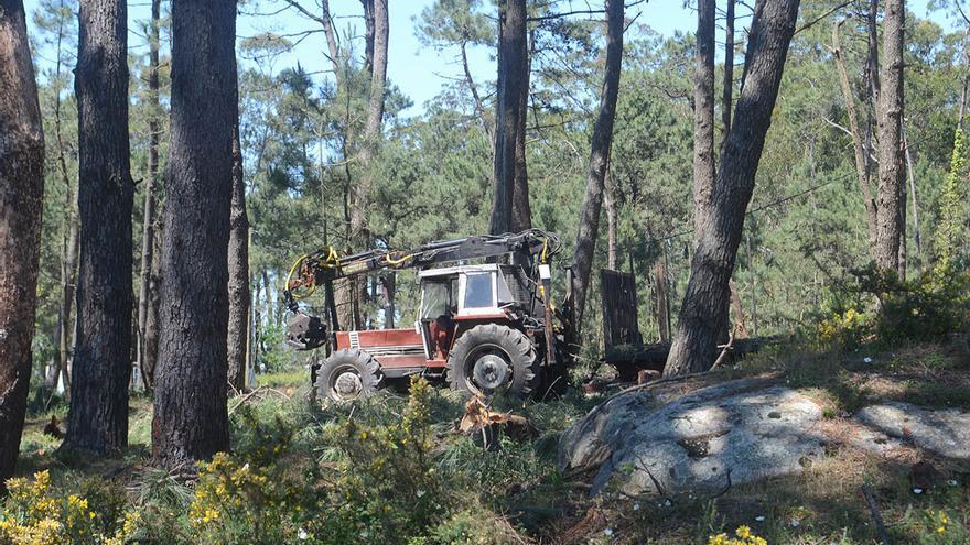 La madera gallega tendrá su propio sello de calidad