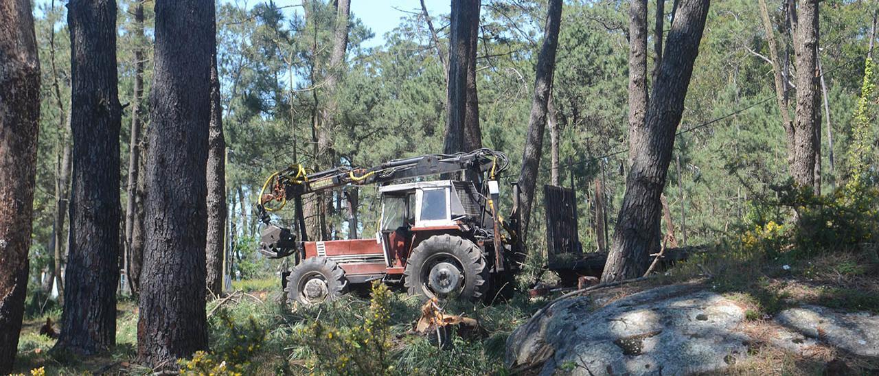 Tala de árboles en Vilanova de Arousa
