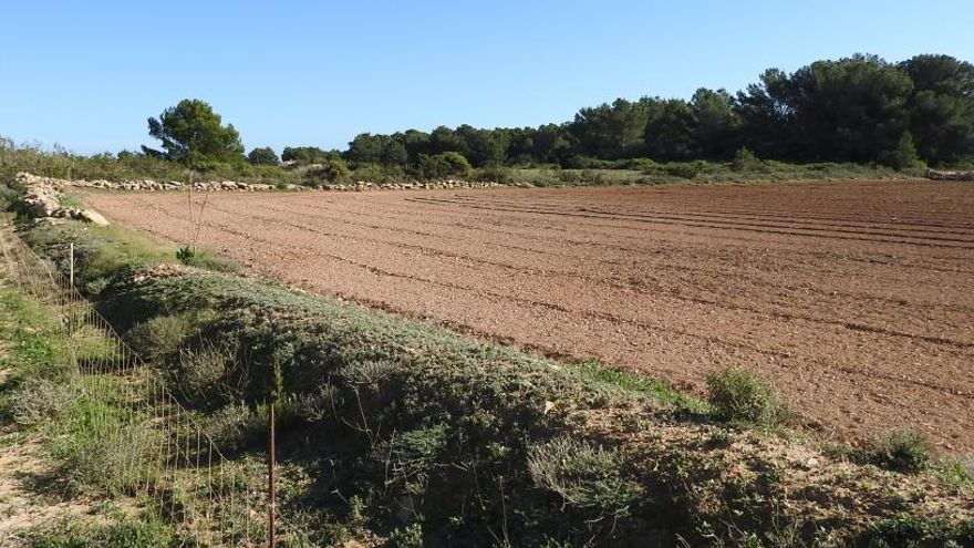Formentera desestima la instalación del parque solar de la Mola