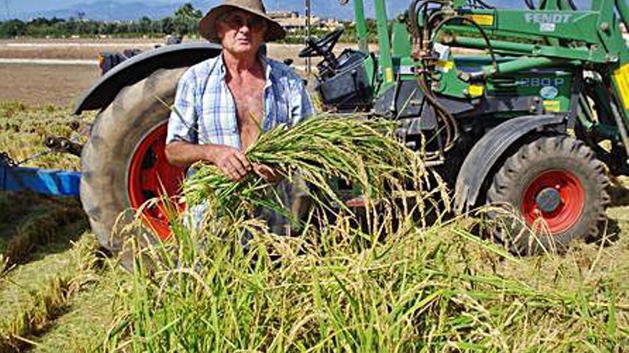 Fallece Miquel Siquier, pionero del cultivo de arroz en tierras de regadío