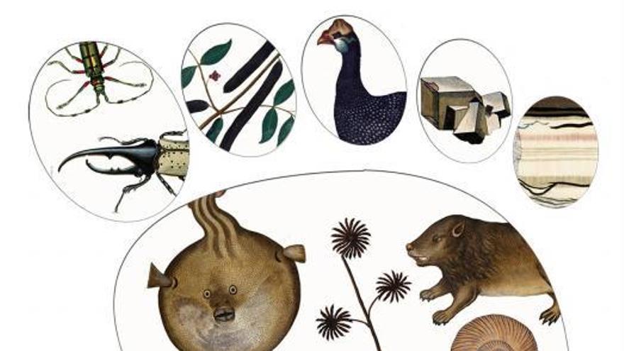La Real Sociedad Española de Historia Natural compleix 150 anys