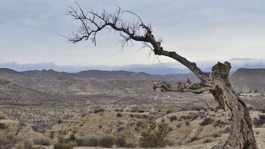 El Congreso aprueba por mayoría el texto de la normativa del Cambio Climático