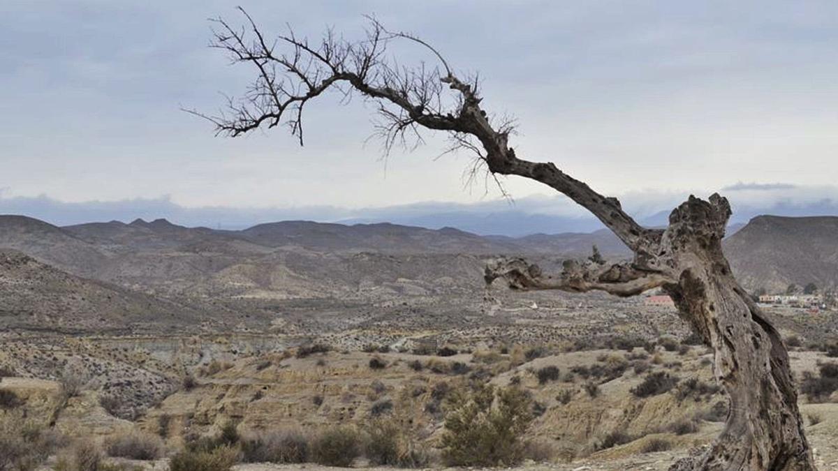 Imagen de una zona desértica de la geografía española. | | E.D.