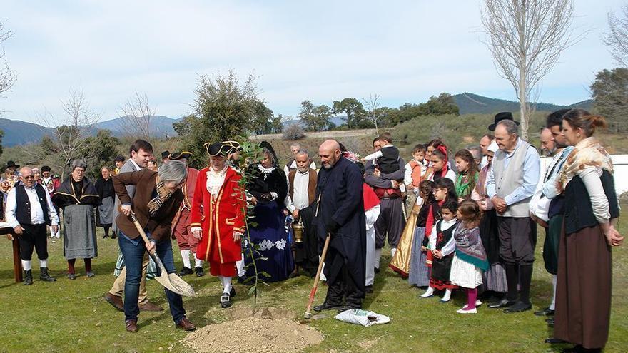 Villanueva de la Sierra celebra la 217 Fiesta del Árbol con plantaciones simbólicas