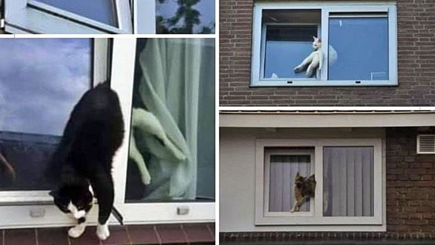 Alertan de graves accidentes de gatos en casas con ventanas oscilantes