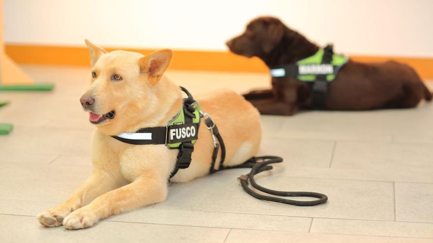 Adiós a Fusco, el can de palleiro más famoso