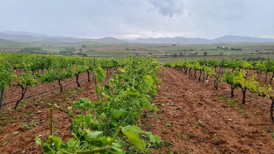 Las tormentas barren Aragón y el granizo arrasa con la vid en Paniza