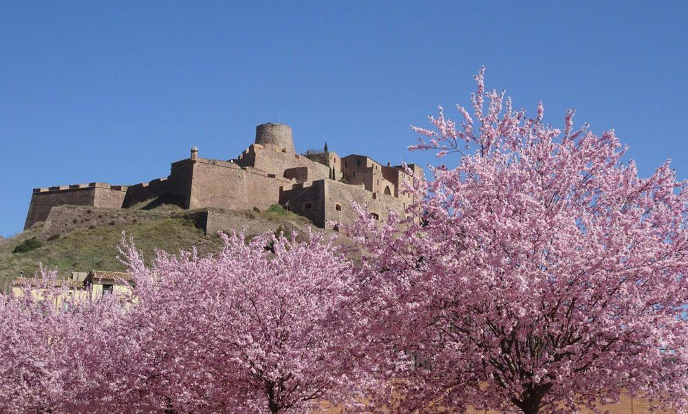 Primavera. A Cardona, podem veure una gran florida de Prunus serrulata, coneguts com a cirerers del Japó, que fan de faldilla al seu castell i deixen un paisatge ben viu i ple de color.