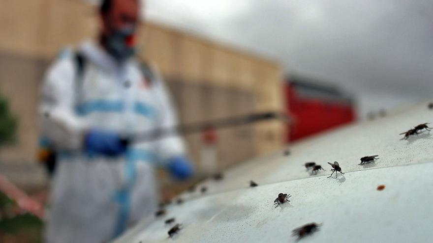 Moya emprende una campaña de fumigación por una plaga de moscas